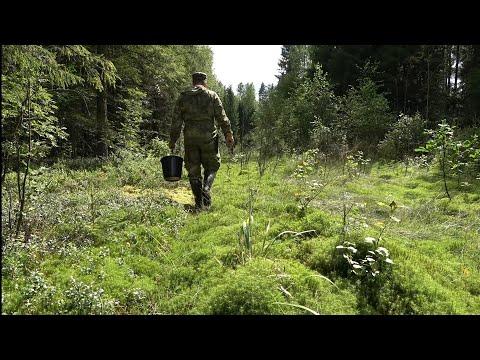 Грибы 2020. Сбор грибов в августе. Грибы разных видов в лесу. Первый выход грибов.