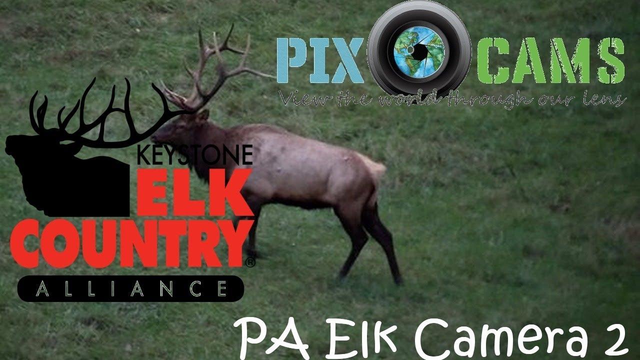 PA Elk Country Visitor Center - Camera 2 Live Stream