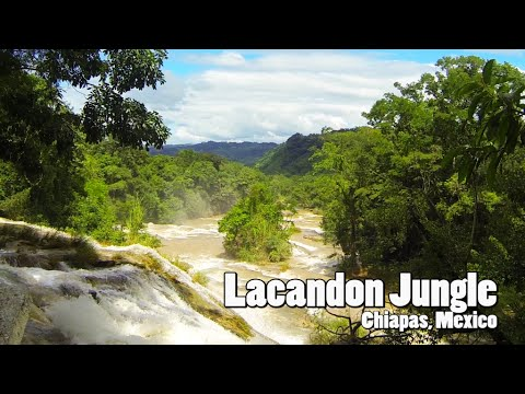 Mexico : Lacandon Jungle with Ecochiapas/Explora (Chiapas)