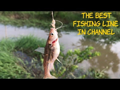 The Best Fishing Line in Channel-Cambodia, How to Use Bait, Hook and Line to fishing In Cambodia