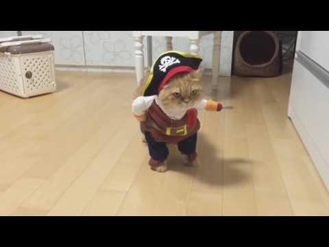 Video di animali divertenti [1] #FUNNYVIDEOS
