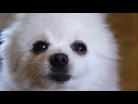 Doge.meme.mp4