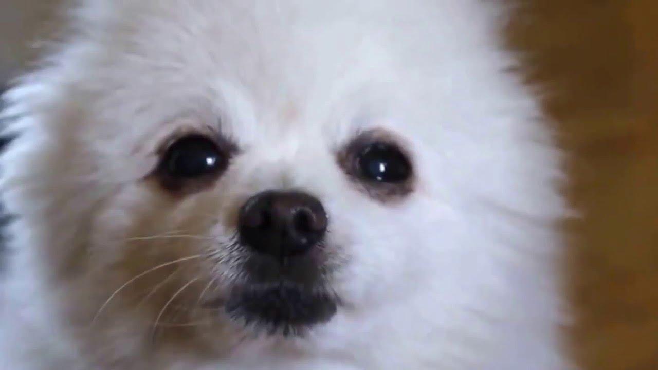 Doge.meme.mp4 - YouTube