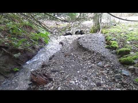 Creek immediately upstream of culvert