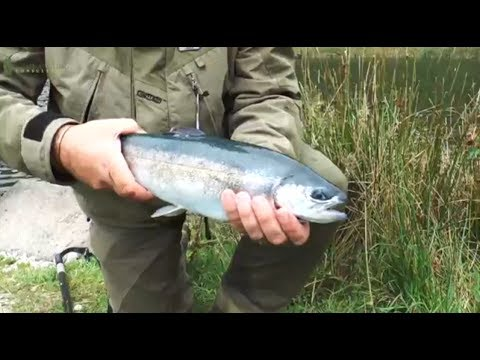 how to fly fish for big trout - fly fishing tips with the game, Fly Fishing Bait