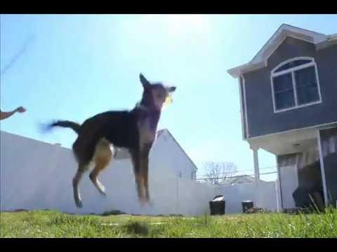 Воспитателю детского, прыгающая собачка гифка