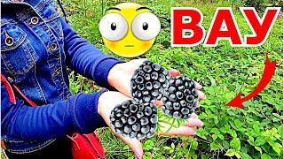 Пилипец! Поляна в лесу с БОМБЕЗНЫМИ ягодами
