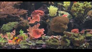 Reef Systems Coral Farm  (Our Ohio)