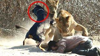 Te dzikie zwierzęta uratowały człowiekowi życie