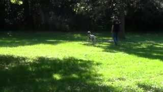 World Class Dog Kennels Pet Resort, Milwaukee Wi.