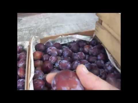Как сделать самогон из терна