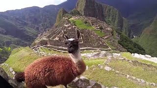 Machu Picchu Peru with beautiful Andean Animals and Kids Andina - Music Intrumental Relax