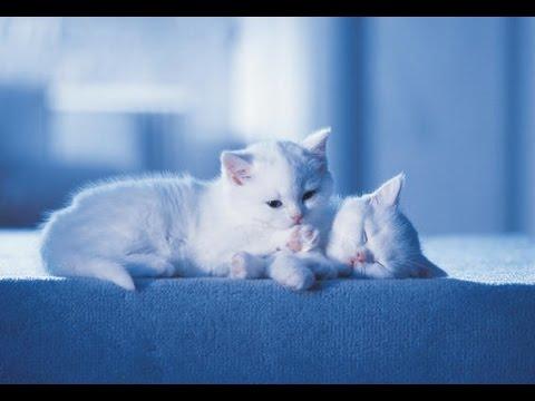 Catsan kattengrind commercial dutch funnycat tv for Catsan lettiera