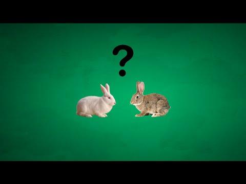 Qu'est ce qu'une espèce ? - BioloQuick n°2