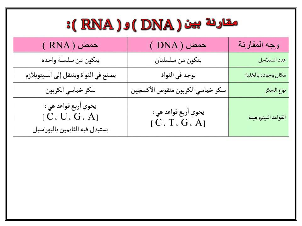 difference between dna and rna pdf
