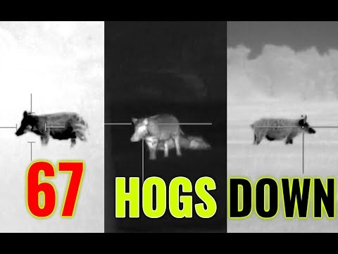 67 Hogs + 2 Coyotes DOWN | Thermal Vision Wild Hog Hunting In Texas