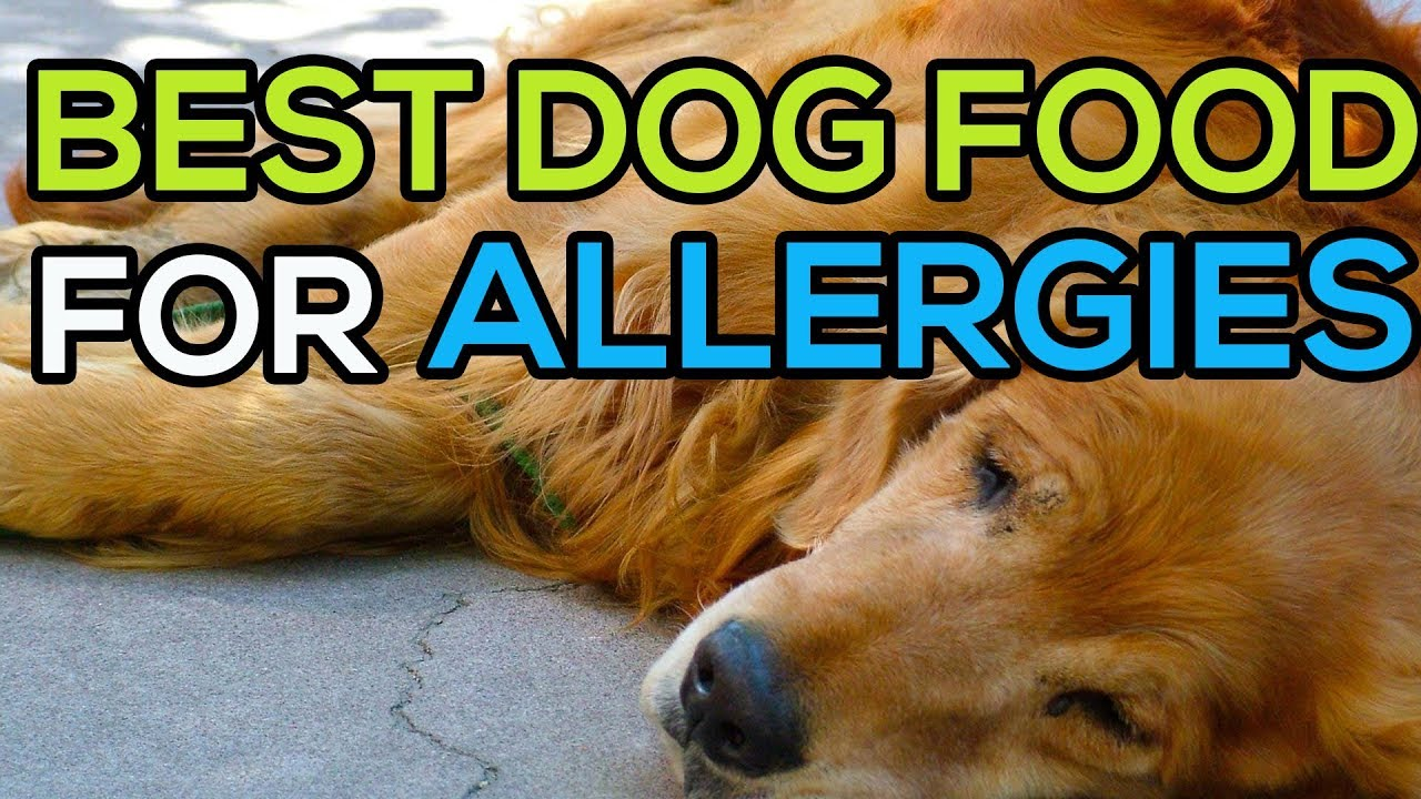 Best Dog Food For Skin Allergies Top 5 Best Dog Food For Allergies