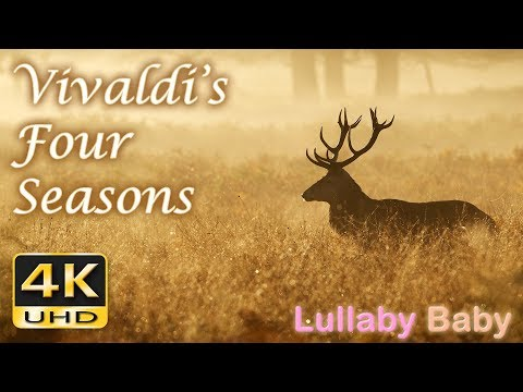 ✰ Vivaldi FOUR SEASONS ♫ Beautiful 4K UHD Video ✰ FULL Concert ✰ SPRING, SUMMER, AUTUMN, WINTER