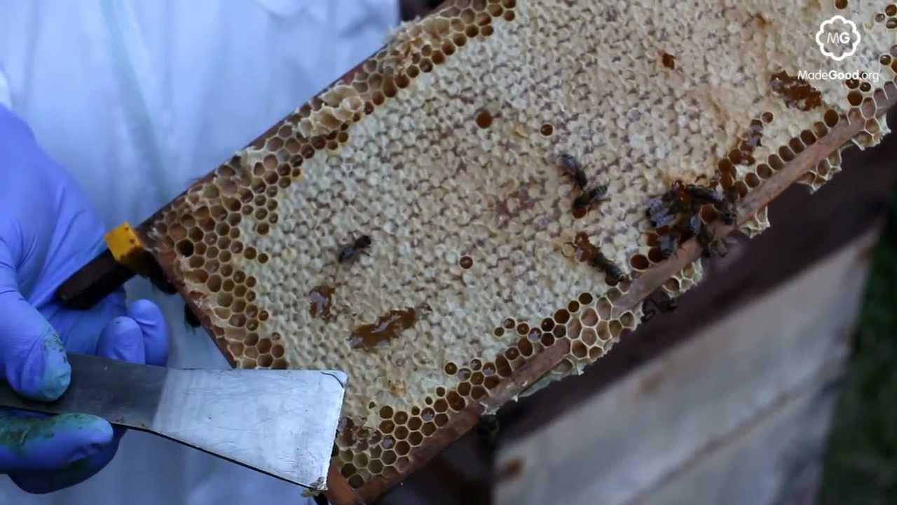 Beekeeping Honey Extraction Youtube