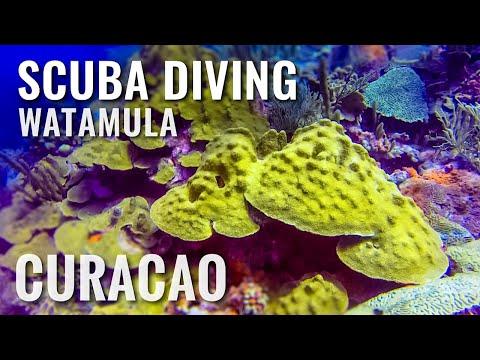 Curacao 🇨🇼 Scuba