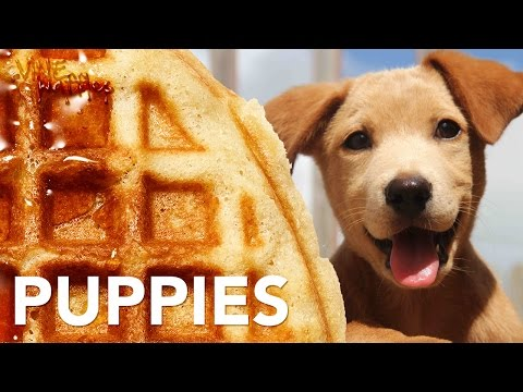 All Puppies & One Meow – So Cute – Vine Humor