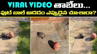 Viral Video : Video Of Tortoise Playing Football Goes Viral | Oneindia Telugu