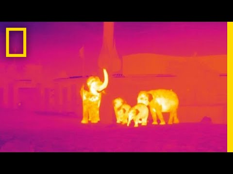 How Infrared Technology Could Help Fight Wildlife Poaching | National Geographic