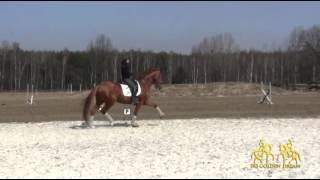 SKJ Golden Dream , rider Aleksandra Szulc