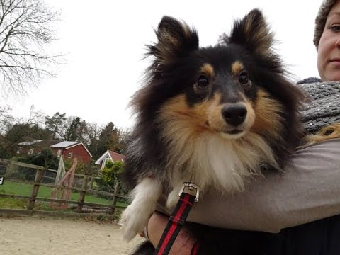 Moushka - Sheltie - 2 Weeks Residential Dog Training