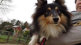 Moushka - Sheltie - 2 Weeks Residential Dog Training