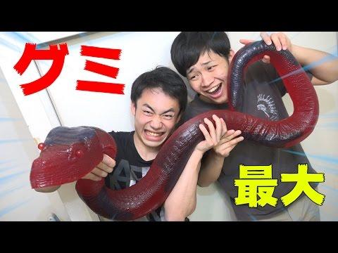 世界最大の超巨大ヘビグミがハンパじゃない!?!?