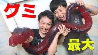 世界最大の超巨大ヘビグミがハンパじゃない!?!? thumbnail