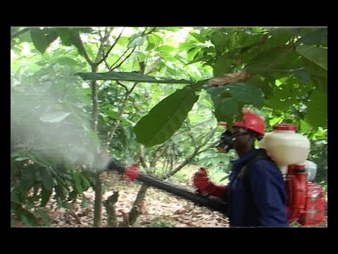 COCOBOD FREE FERTILIZER DISTRIBUTION PROJECT IN 2014