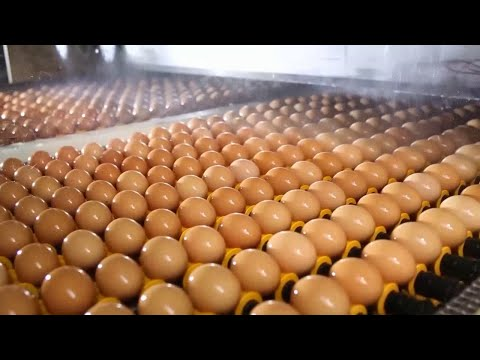 China's largest egg factory. Incredible technology.