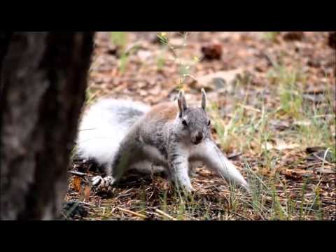 Funny Talking Animals - Squirrel Singing the Nut Song - Efren Duque
