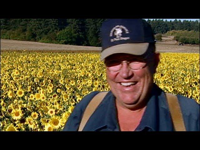 Sunflower Seeds Forever