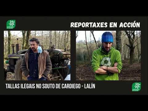 """Ecoloxistas denuncian """"cortas ilegais"""" no souto de Cardiego,  Lalín"""
