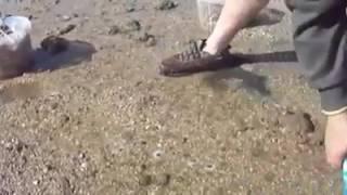 Sale nella sabbia...SUPER PESCA di cannolicchi!!!
