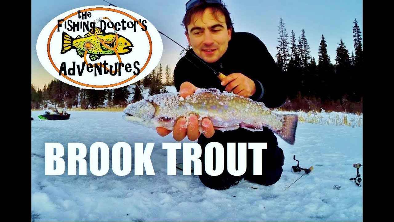 Chicken ranch lake brook trout ice fishing youtube for Ice fishing youtube