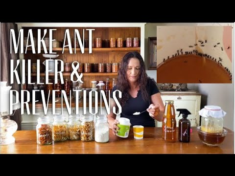 HOW TO KILL ANTS IN THE HOUSE - HOME REMEDY - Protect your Pantry