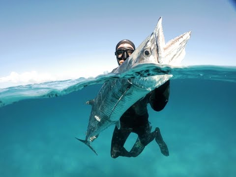 Spearfishing Northern NSW and South East QLD 2