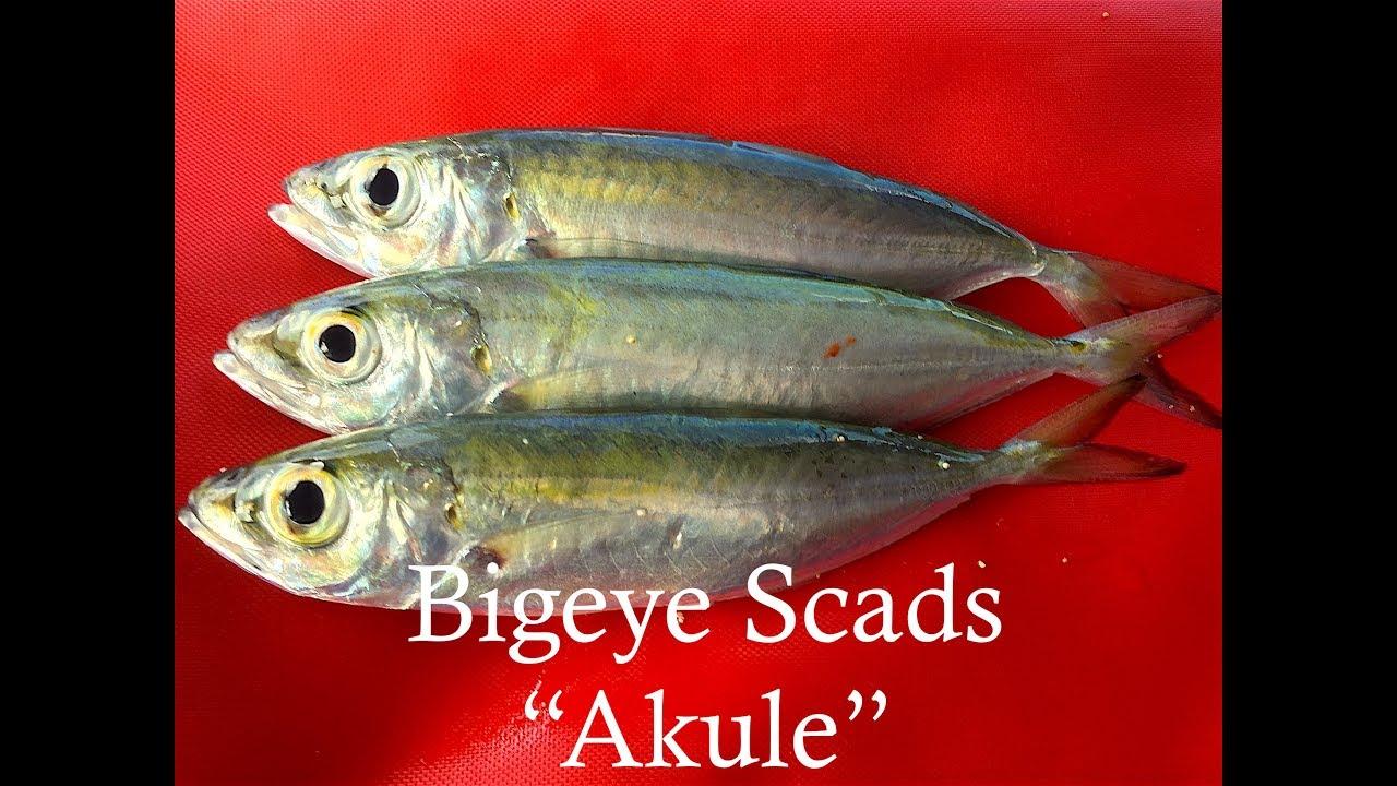 Halalu Fish