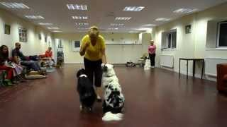 Purbeck Agility Group - Dog Training