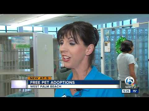 Free Pet Adoptions In West Palm Beach