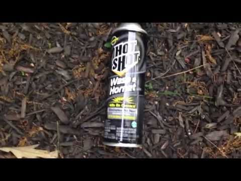 How To Kill A Bee Hive Nest With Spray and Also Get Attacked