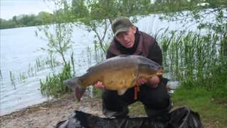 Linear Fisheries the DVD 2016