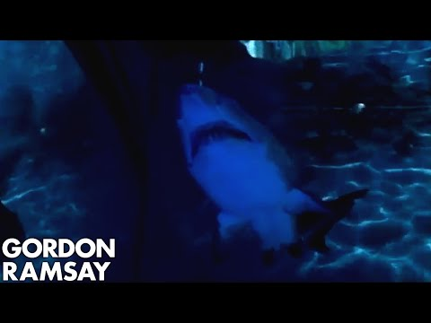 Shark extinction and its effect on ocean ecosystem - Gordon Ramsay