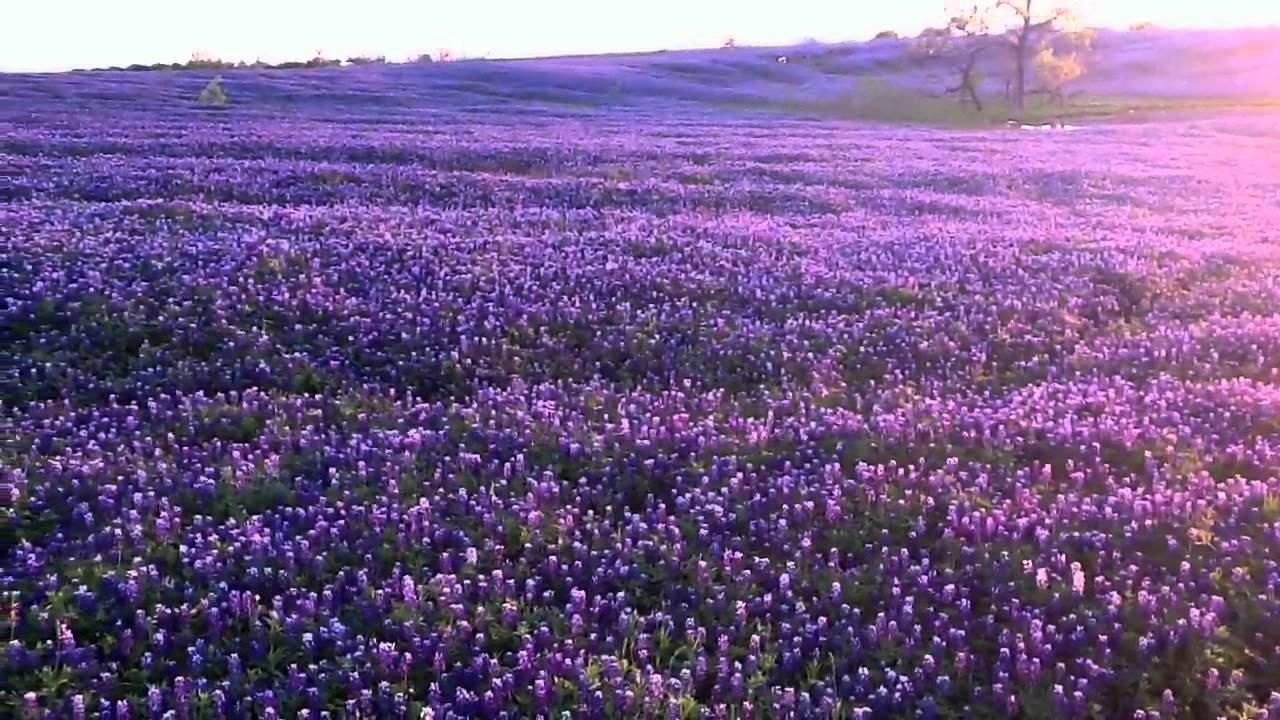 2012 Ennis Bluebonnets Mach Road At Sunset Youtube