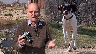 Foto v kostce - Fotíme 15 - Focení psů a domácích mazlíčků
