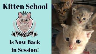 Kitten School is Back in Session!